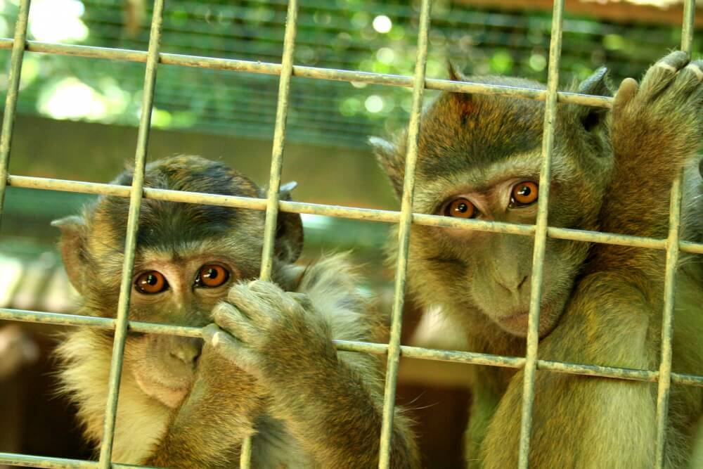 aapjeskijken
